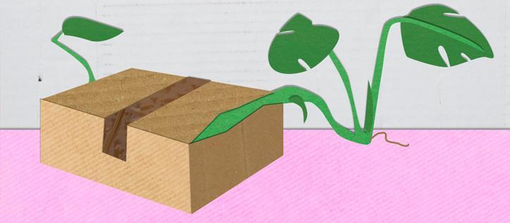 Pflanzen versenden - besten Verpackungstipps